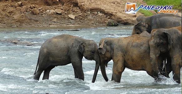 elephant orphanage sri lanka